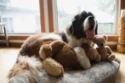 狗狗万圣节噪音焦虑和你可以做的8件事