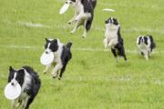 10项与狗一起玩会更有趣的奥林匹克运动