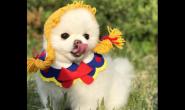 有肠胃病的狗狗平常要怎么养