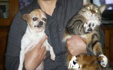 春季猫狗疾病预防与照顾