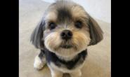 平常怎么做好狗狗的毛发保养