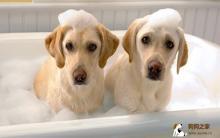 狗狗美容清洁 洗澡9大要点