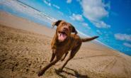 10种喜欢游泳和在水中玩耍的狗