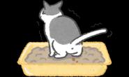猫猫便秘症状要注意 当心巨结肠症找上门!