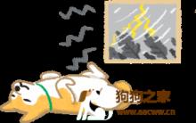 狗猫训练术:狗狗社会化好重要?从小多见识,长大豹子胆!