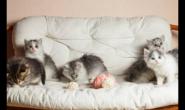 发育中的小猫咪吃什么猫粮 好猫粮好吗