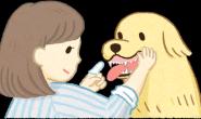 猫狗的牙龈颜色跟健康状况有关?刷牙时顺便做个检查吧!