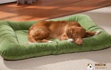 狗常见胃疾病 症状及治疗方法