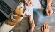 狗狗气胸的症状、原因和治疗方法