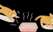 不是干净的厕所猫主子不上?抗议猫砂盆太脏的4个行为!
