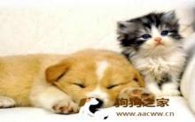 黑熊犬:冬季宠物猫狗饲养及护理须知