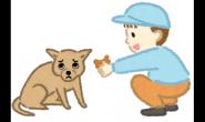 别让环境压力成为狗狗拒食主要原因