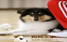 狗狗声响训练方法注意事项
