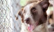 如何找到合适的动物收容所收养狗?