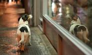 为什么狗狗试图逃脱?如何阻止这种坏习惯?