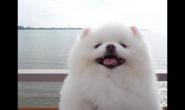 改善狗狗的毛发有哪些要点