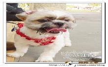 【狗狗训练】定点大小便之辛酸血泪史