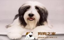狗狗毛髮有光泽 从饮食梳理着手