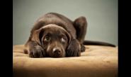 为什么狗狗会吃青草?吃青草好吗?
