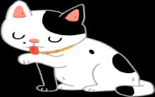 牙齿不只能吃东西 猫咪门牙竟然是除蚤小帮手?