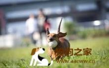 爱犬训练与养育 专业15法则(下)