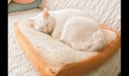 为什么猫咪会有不吃猫粮的情况