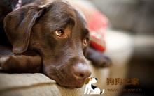 狗狗疾病症状 掌握健康10大警告