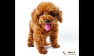 狗狗经常抓痒、呕吐、腹泻?可能就是他们惹的祸
