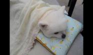 冷天如何保障狗狗的健康
