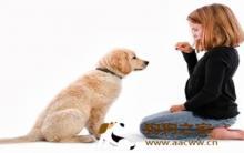 训练狗狗:教会宠物基本服从