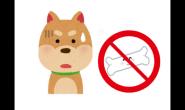 这个食物狗狗不能吃 饲主都要知道的注意事项