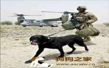 军犬战争创伤症候群 性格180度转变