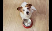 重视它的晚年健康—老狗狗饮食篇