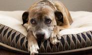狗狗是否患有季节性情感障碍?