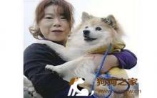 最长寿狗儿Pusuke安祥离世
