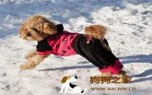 冬季狗狗日常照顾及疾病预防