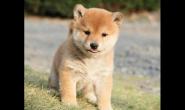 如何了解小狗狗的健康状况