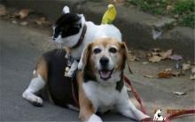 宠物传染病 犬猫鸟病源解析