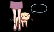 害怕时狗狗为什么会躲在主人的脚后?该如何是好?