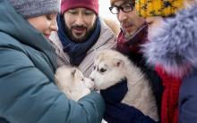 阿拉斯加雪橇犬幼犬