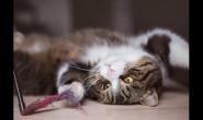 六个月大的猫咪平常怎么喂养