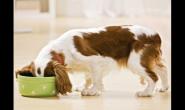 让超重的宠物恢复体型的8种小技巧