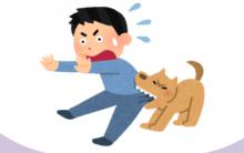 如何训练狗狗不乱咬人?告诉你小技巧