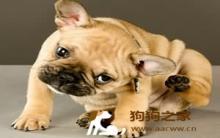 狗狗皮肤病怎么办?专家给建议
