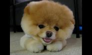 狗狗冬天不喜欢出门怎么办