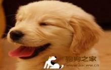 识别狗狗咳嗽及心脏疾病预防