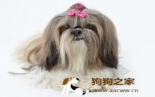 宠物美容:帮狗染髮造型注意事项