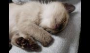 怎么纠正猫咪挑食的坏习惯
