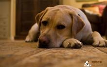 如何训练小狗乖乖单独在家