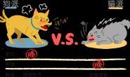 狗狗vs猫猫 狩猎比赛谁能胜出?